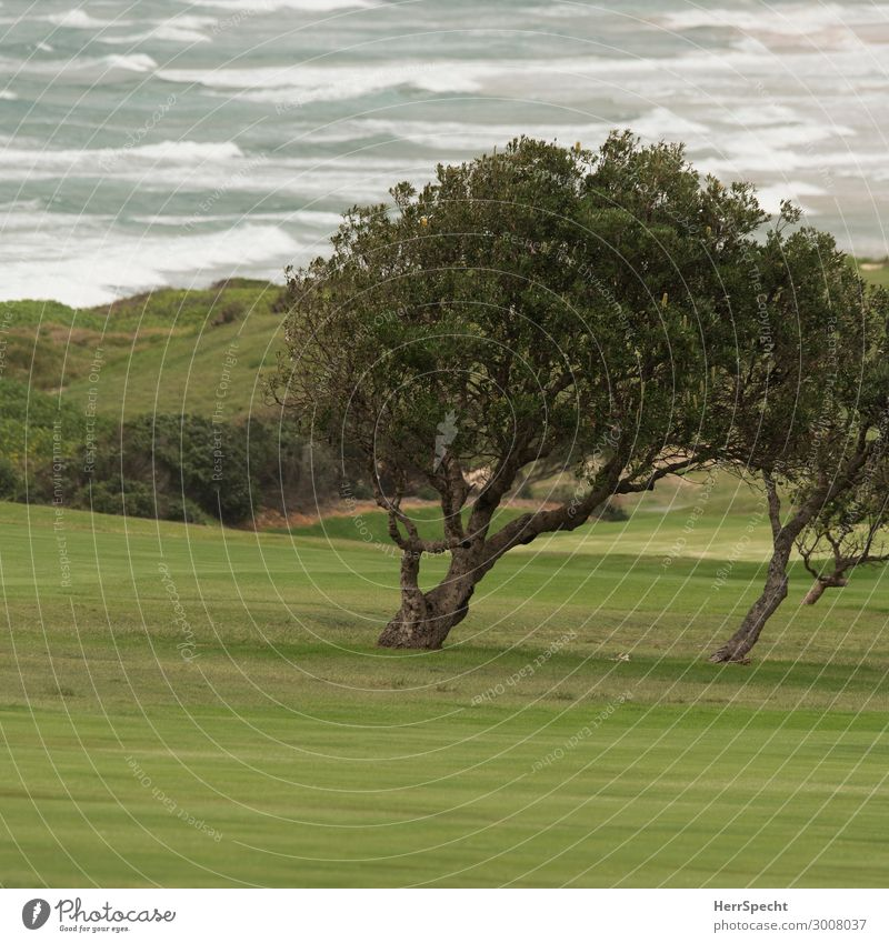 Garden by the sea Environment Nature Landscape Plant Bad weather Wind Tree Park Waves Coast Esthetic Maritime Beautiful Green Golf course Character Elements