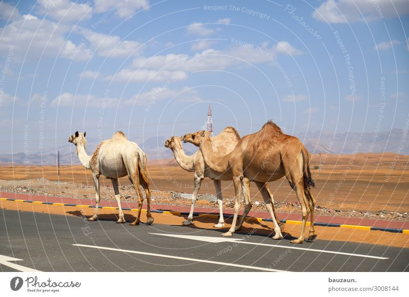 off to the weekend. Vacation & Travel Tourism Trip Adventure Far-off places Summer Environment Nature Sand Sky Beautiful weather Desert Oman Transport Street