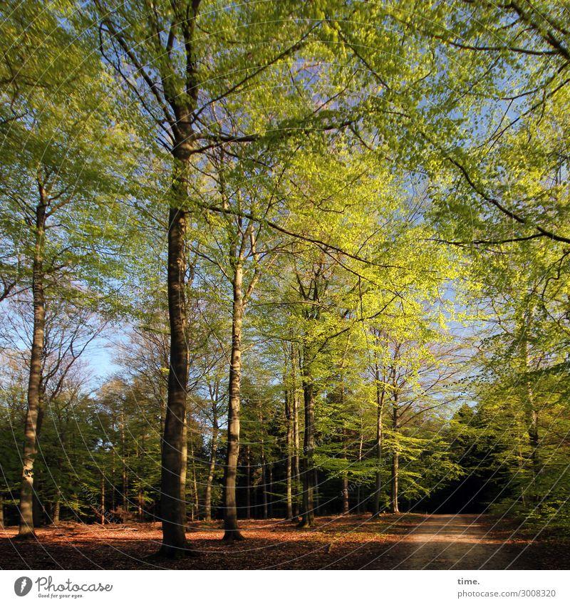 Nature Landscape Tree Calm Forest Far-off places Life Environment Spring Lanes & trails Time Together Communicate Arrangement Joie de vivre (Vitality)