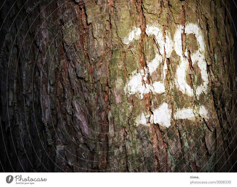28 daylight Colour Orientation Information number White Tree mark hiking trail Arrow bark Tree trunk Left Direction