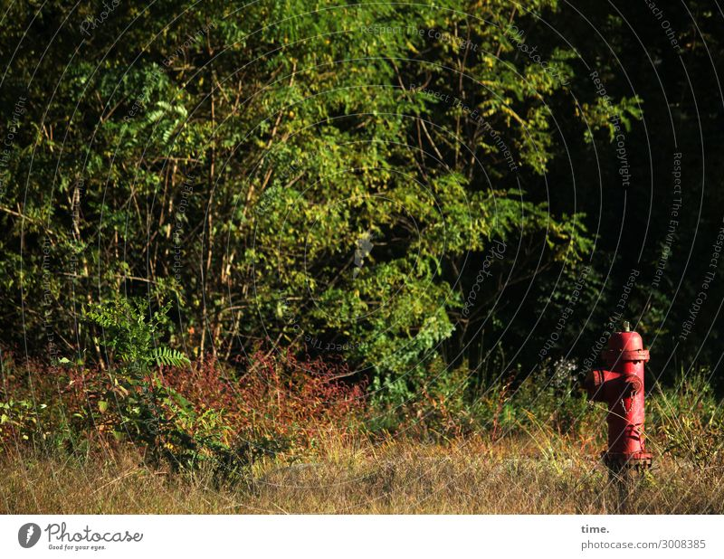 mind Fire department Fire hydrant Workplace Services Nature Landscape Plant Beautiful weather Tree Forest Lanes & trails Roadside Green Red Watchfulness