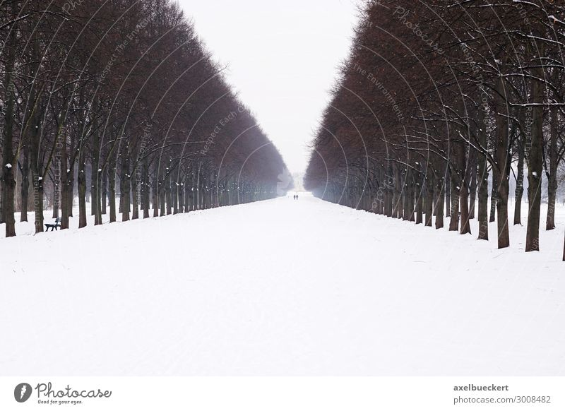 Herrenhäuser avenue in the snow Leisure and hobbies Vacation & Travel Tourism Trip City trip Winter Snow Winter vacation Nature Landscape Ice Frost Tree Garden