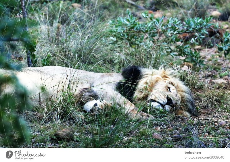 Vacation & Travel Relaxation Animal Far-off places Tourism Exceptional Freedom Trip Wild Wild animal Adventure Fantastic Dangerous Observe Sleep Pelt