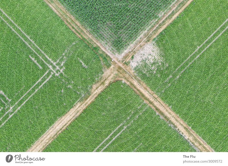 crossroads Summer Agriculture Forestry Environment Nature Landscape Plant Maize Maize field Turnip field Rapes Field Deserted Lanes & trails Road junction