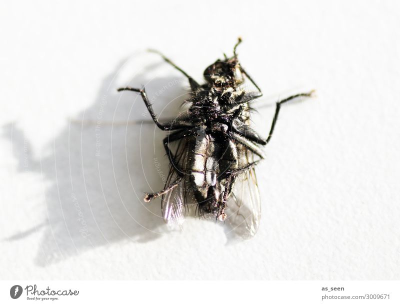 post mortem Animal Dead animal Fly Wing Insect 1 Lie Old Authentic Dirty Disgust Creepy Small Near Gray Black Death Senior citizen Bizarre Nature Environment