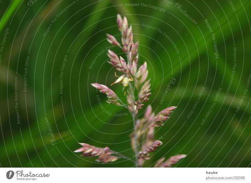 Calm Animal Meadow Connectedness Symbiosis