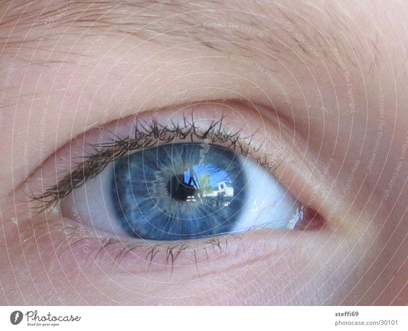 ophthalmoscopy Reflection Eyelash Pupil Children's eyes Human being Eyes blue eyes Close-up