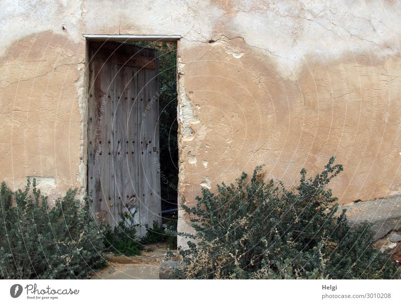 old wall of a building with slightly opened wooden door and plants Plant Beautiful weather Bushes House (Residential Structure) Building Wall (barrier)