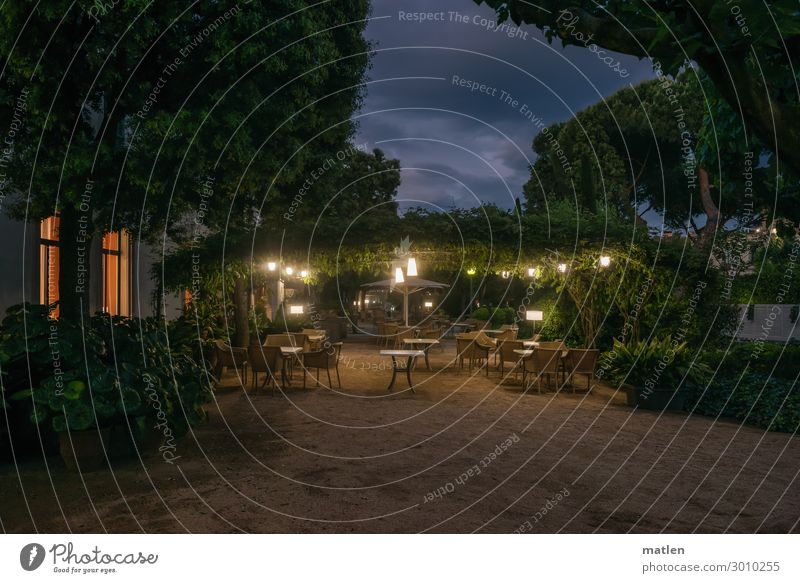 summer night Plant Sand Clouds Night sky Summer Tree Garden Park Old town Deserted House (Residential Structure) Wall (barrier) Wall (building) Terrace Window