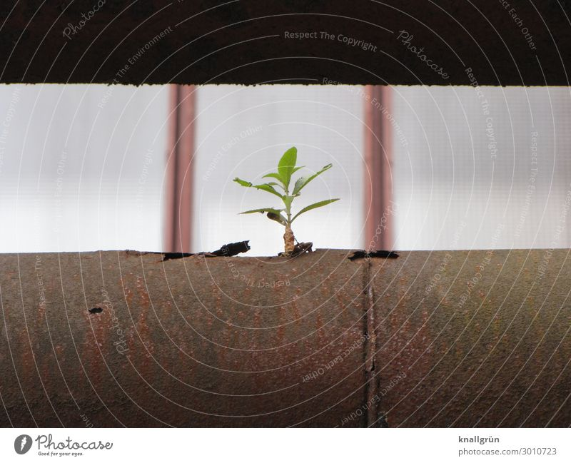life force Plant Tree offshoot Pipe Conduit Industrial construction Growth Small Town Brown Green Emotions Life Nature Survive Environment Vigor Colour photo