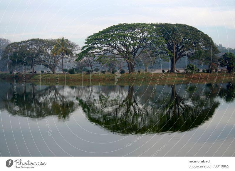Trees and Reflection Nature Water Landscape Leaf Calm Winter Black Cold Lake Gray Fog Esthetic Serene Haze Pond