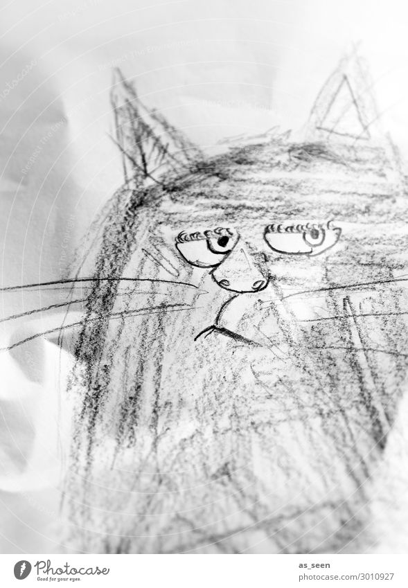 Grumpy Cat Draw Animal face Stationery Paper Piece of paper Pen Looking Authentic Brash Uniqueness Astute Funny Rebellious Gray Black White Emotions Moody