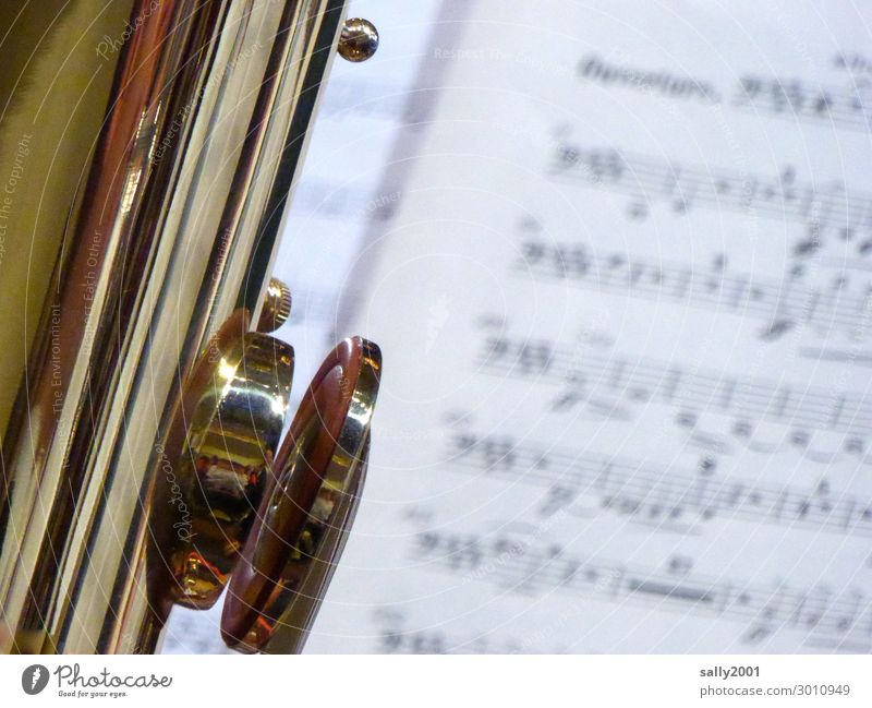 big mouth... Music Concert Orchestra Musical notes Wind instrument Brass instrument Tuba bass clef Playing Esthetic Exceptional Glittering Gold Flap Large