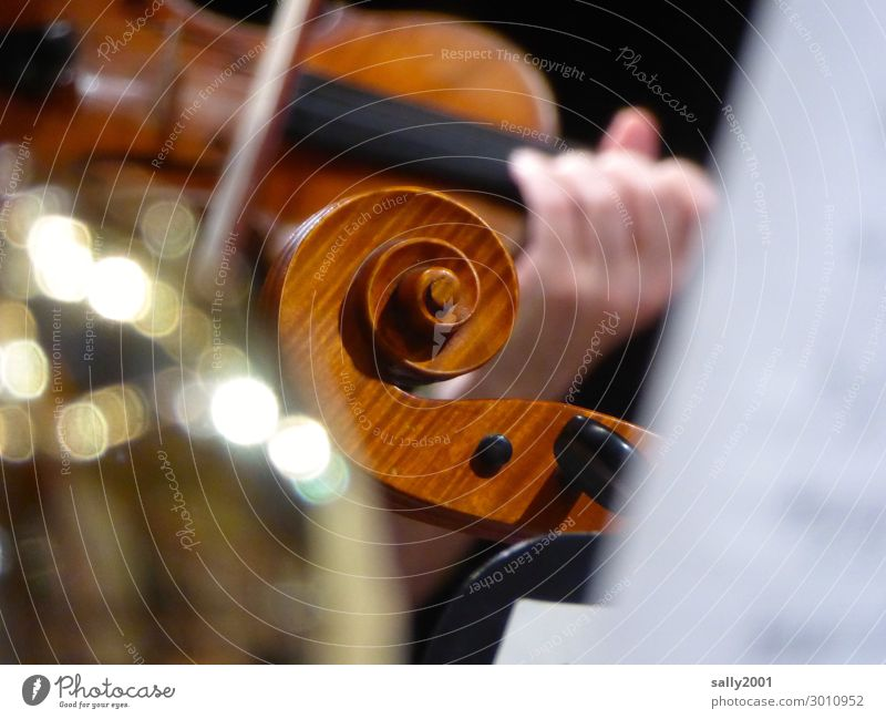 vital | music... Music Orchestra Violin violin violin snail vertebra Playing Make music in common Attachment fiddles play the violin Concert Musical instrument