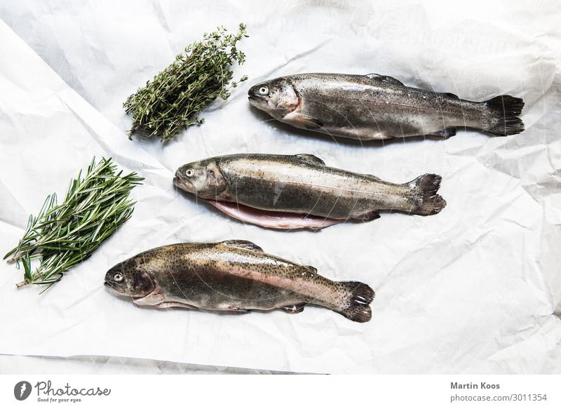 Trout ready to cook Food Fish Herbs and spices Nutrition Eating Organic produce Vegetarian diet Diet Slow food Italian Food Lifestyle Healthy Overweight