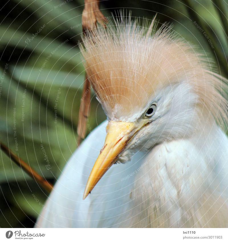 Nature Summer Green Water White Animal Black Yellow Bird Brown Gray Park Feather Beak Zoo Heron