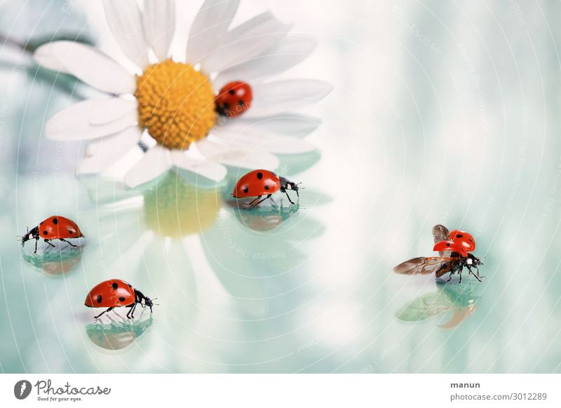 Good luck Happy Feasts & Celebrations Wedding Birthday Baptism Congratulations Blossom Marguerite Beetle Ladybird Group of animals Sign Good luck charm Crawl
