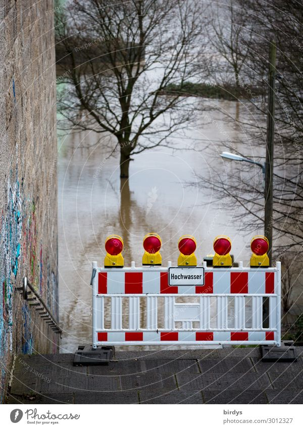 high water Autumn Winter Climate change Bad weather Storm Tree River Rhine Wall (barrier) Wall (building) Stairs Sign Characters Signs and labeling Signage