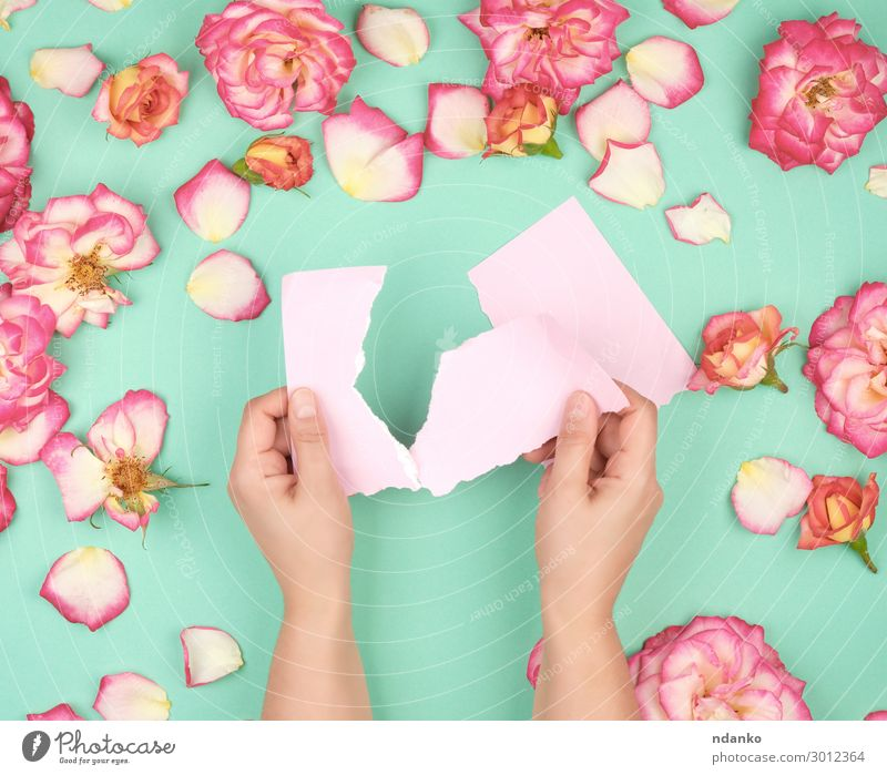 two hands hold an empty pink sheet Design Beautiful Summer Decoration Feasts & Celebrations Wedding Birthday Business Hand Plant Flower Leaf Blossom Paper
