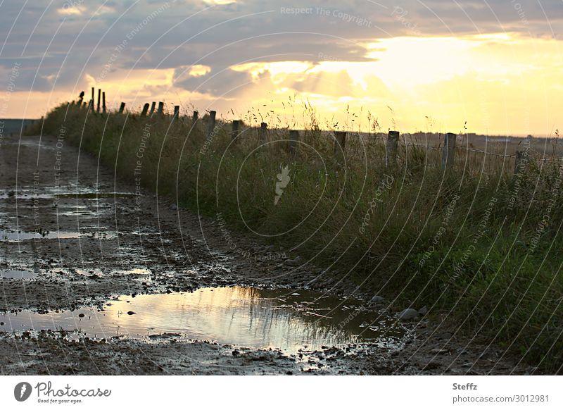 Nature Landscape Loneliness Calm Dark Yellow Environment Natural Lanes & trails Grass Bird Brown Moody Rain Field Weather