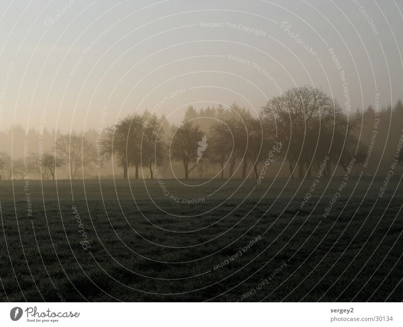 early in the morning 2 Morning Fog Agriculture Gray Field Tree Sunrise Dew Mystic