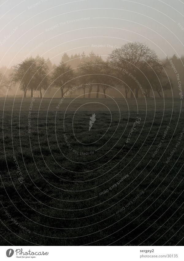 early in the morning 1 Morning Fog Agriculture Gray Field Tree Sunrise Dew Mystic