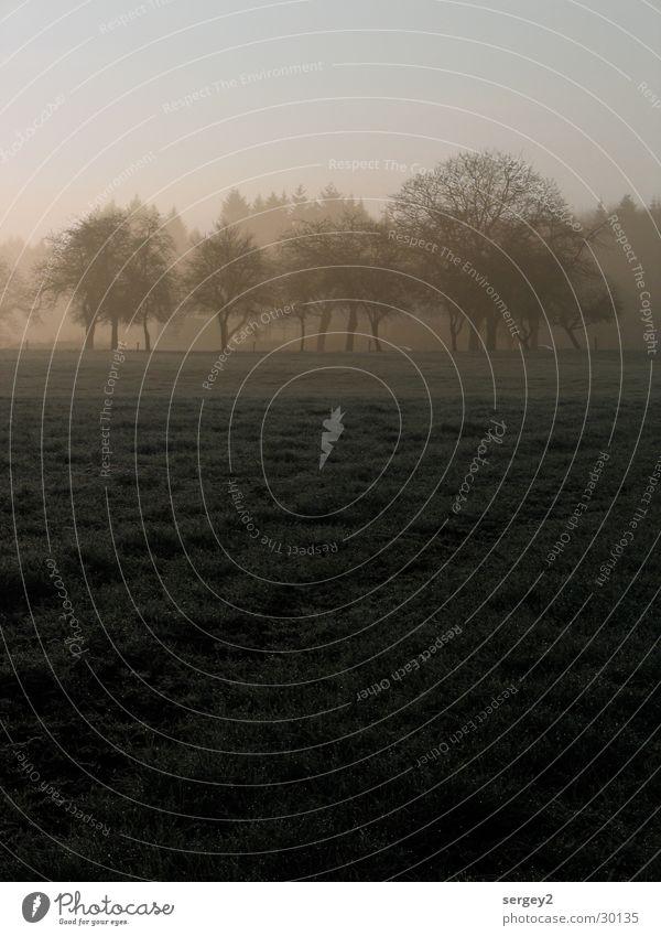 Tree Gray Field Fog Agriculture Dew Mystic