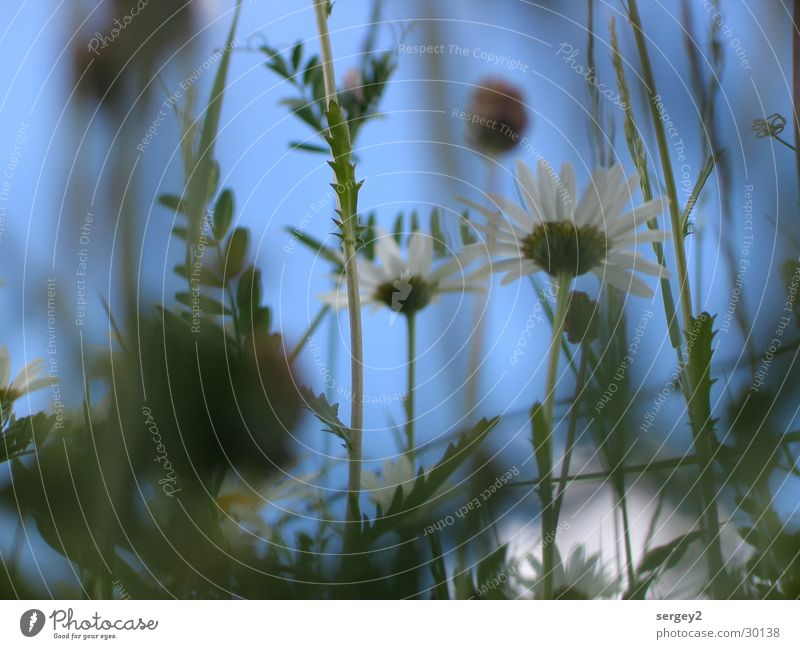 tell me where the flowers are... Grass Green Flower Field Zoom effect Worm's-eye view Close-up Sky Floor covering