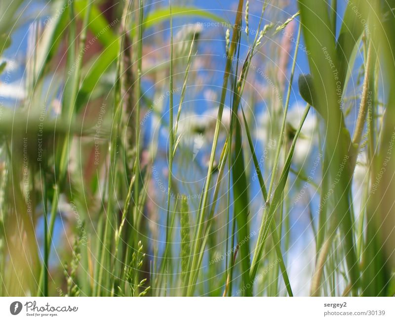 it greenens so green.... Grass Green Flower Field Zoom effect Close-up Sky Floor covering