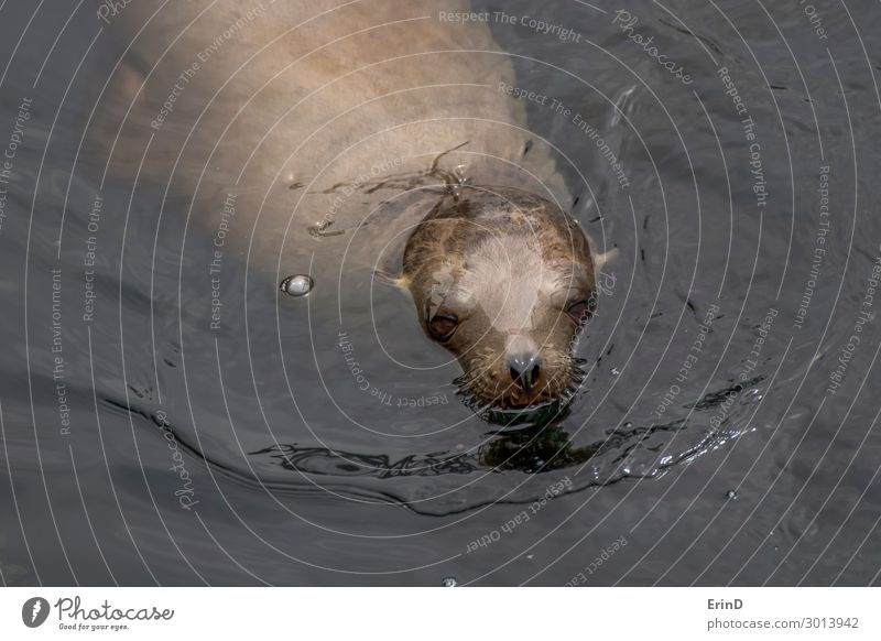 Sea Lion Rising from Ocean in Monterey California Close Up Face Group Environment Nature Animal Coast Fur coat Cool (slang) Fresh Uniqueness Wet Cute Sea lion