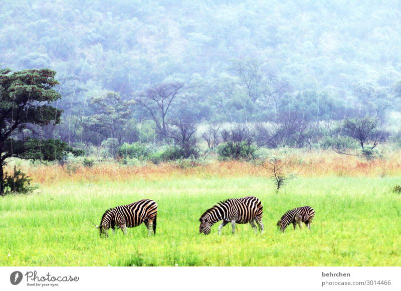 triad | synchronous grazing Love of animals Animal protection Colour photo Deserted Exterior shot Observe Wild Fantastic Wilderness Exotic Impressive especially