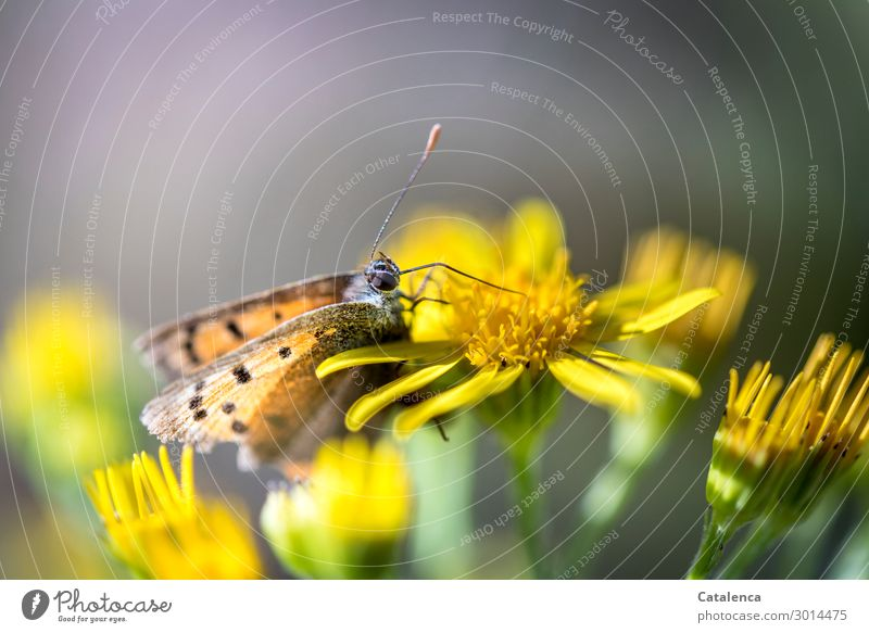 Nature Summer Plant Beautiful Green Animal Leaf Life Yellow Blossom Meadow Small Orange Gray Moody Blossoming