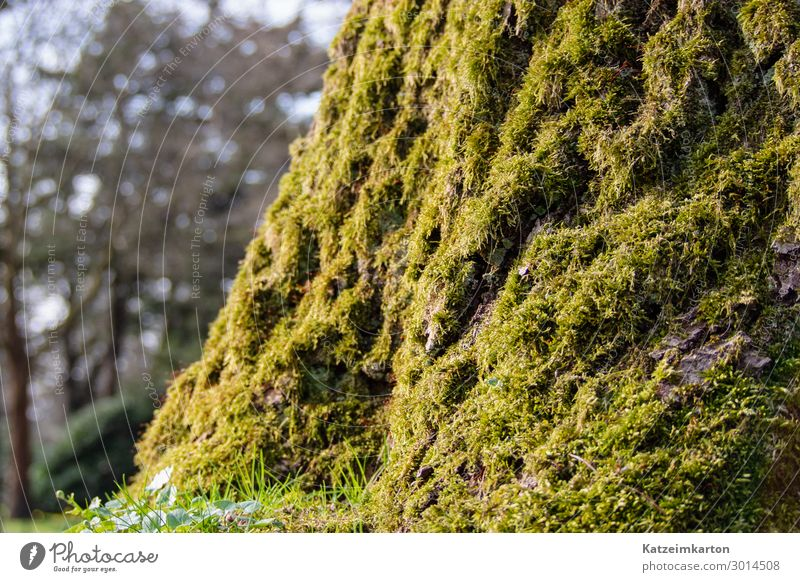 mossy Nature Landscape Animal Summer Garden Park Meadow Forest Wood Glass Illuminate Growth Overgrown Moss Tree Tree trunk Plant Green Background picture