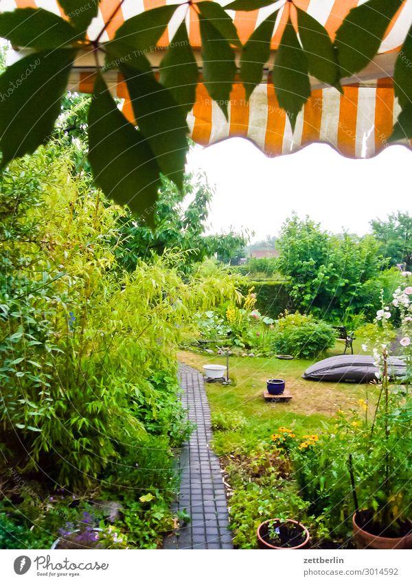 Whale in the garden Flower Blossoming Garden Grass Garden plot Venetian blinds Sun blind Garden allotments Deserted Nature Plant Lawn Meadow Summer Copy Space