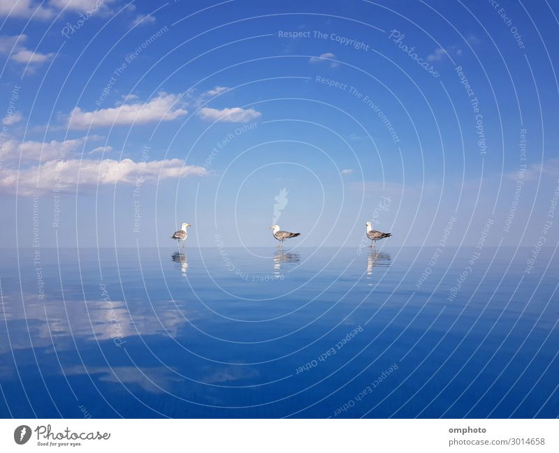 Three seagulls with water reflections standing on the overflow edge of a swimming pool on a blue sky background Beautiful Swimming pool Summer Sun Ocean Nature