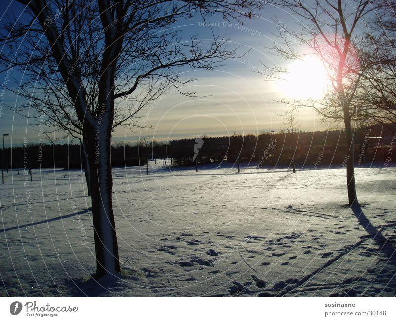 Tree Winter Landscape Sweden Winter sun Ryd