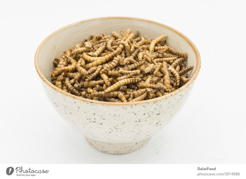 mealworms crustaceans tenebrio molitor isolated Bowl Body Nature Animal Worm Packaging Freeze Disgust Fresh Creepy Natural Brown Yellow Black White background