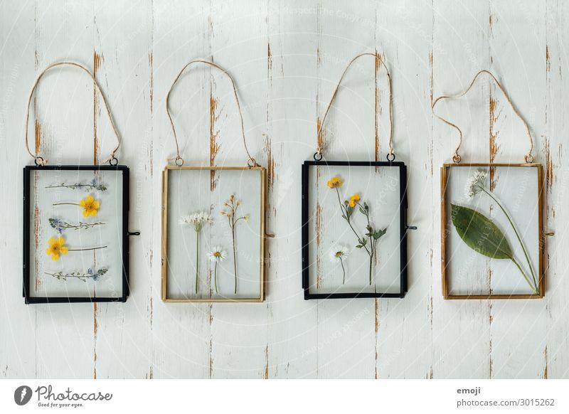 Flower Interior design Living or residing Decoration Kitsch Collection Inspiration Dried Self-made Picture frame Odds and ends