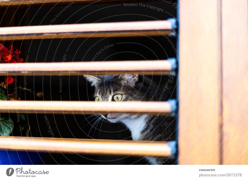 Yellow eyes cat behind a wooden blinds Cat Vacation & Travel Nature Old Summer Blue Colour Beautiful White House (Residential Structure) Animal Loneliness Dark