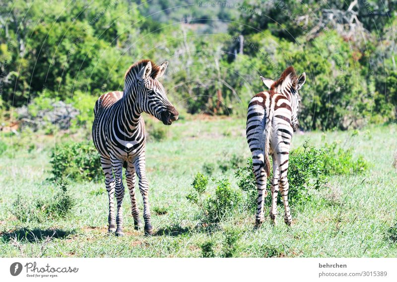 from back to front addo Tails Hind quarters Rear view Observe Trip Tourism Vacation & Travel Impressive Adventure Far-off places Freedom Safari Environment