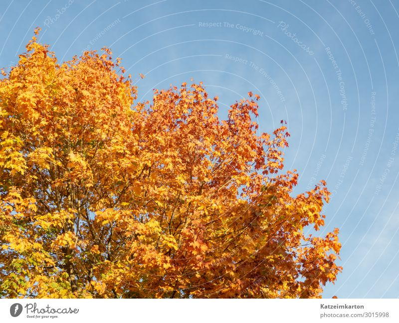 autumn foliage Garden Environment Nature Animal Sky Cloudless sky Autumn Climate change Beautiful weather Tree Park Forest Illuminate Senior citizen Life