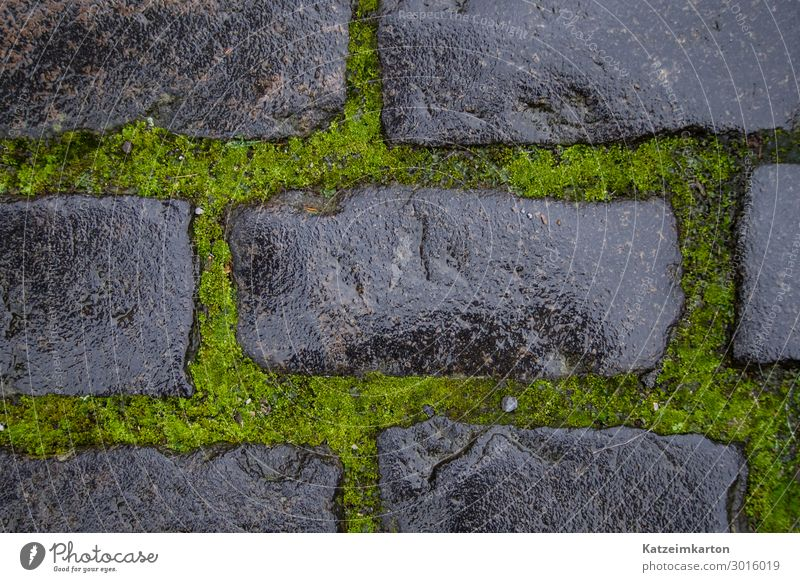 Wet Stones and Moss - Background Earth Wall (barrier) Wall (building) Street Lanes & trails Natural Gray Green Simple Sidewalk Floor covering Background picture