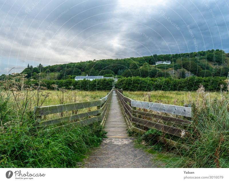 the way Vacation & Travel Hiking Meadow Field Coast North Sea Green Loneliness Footbridge Bridge railing Scotland Nature reserve Colour photo Exterior shot