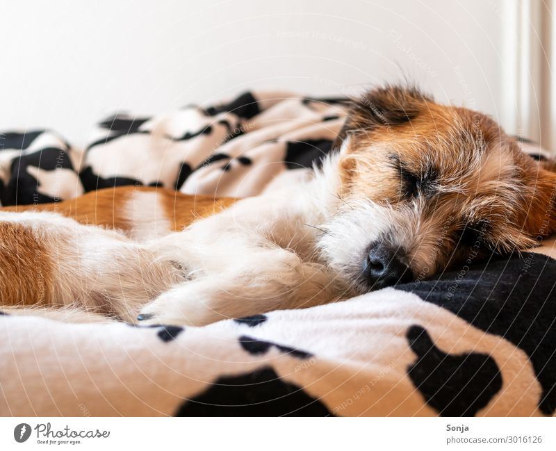 Small dog sleeping on a beanbag Animal Pet Dog Animal face Pelt Paw 1 dog bed Sleep Cuddly Natural Cute Contentment Together Love of animals Peaceful Calm