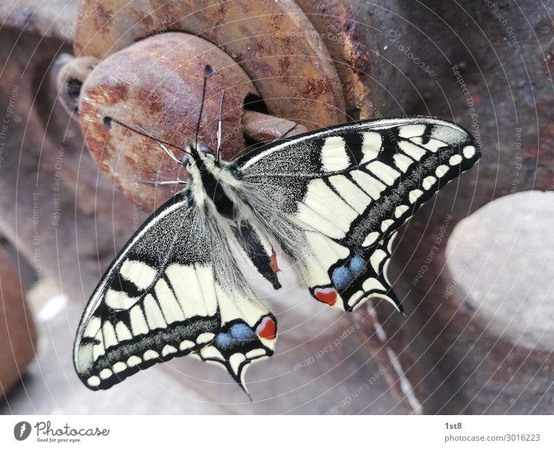 Butterfly Swallowtail Butterfly swallowtail Environment Nature Plant Animal 1 Concrete Metal Steel Rust Line Stripe Flying Illuminate Esthetic Elegant Fantastic