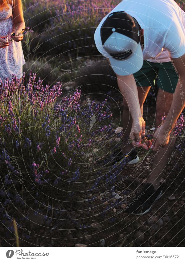 Picking Lavender II Lifestyle Human being Masculine Feminine Arm 2 30 - 45 years Adults Nature Landscape Beautiful weather Warmth Field Blossoming Fragrance