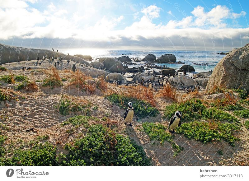 *1300 penguins:) Vacation & Travel Tourism Trip Adventure Far-off places Freedom Nature Landscape Sky Clouds Rock Waves Coast Beach Bay Ocean Wild animal Bird
