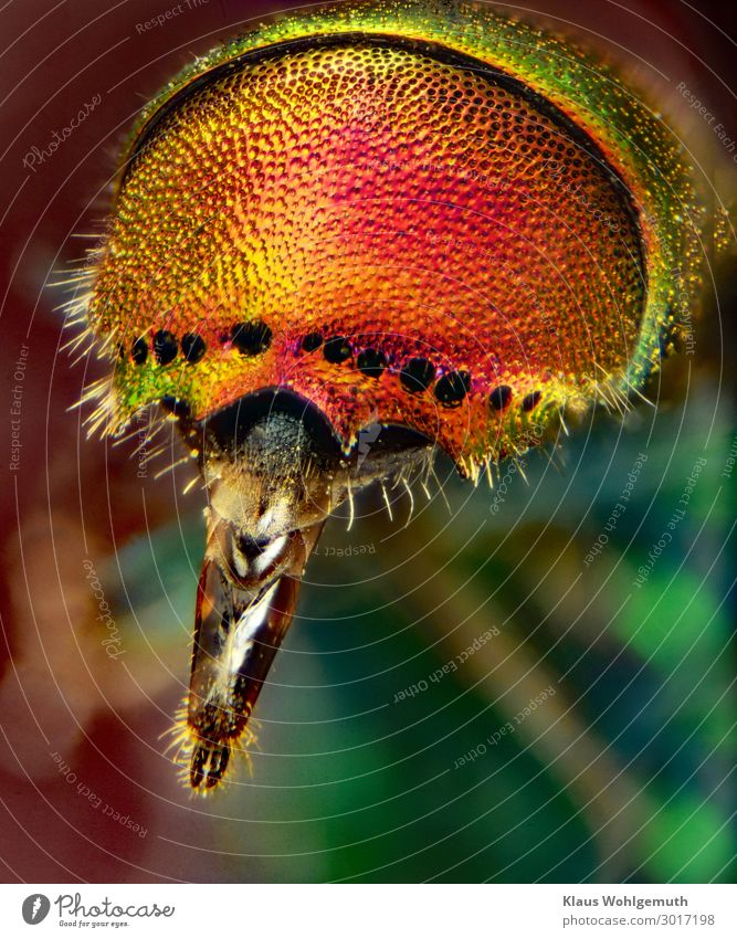 Naturally beautiful Animal Summer Wild animal Wasps gold wasp 1 Microscope Exotic Glittering Thorny Blue Brown Multicoloured Yellow Gold Green Orange Pink Red