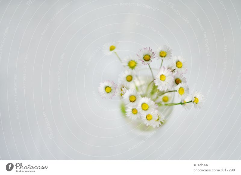 daisies flowers Plant wax blossoms Daisy Vase Neutral background Simple minimalism Bright White Birthday Wellness Spring Delicate Light
