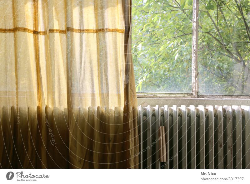 The window to the courtyard Living or residing Flat (apartment) Redecorate Old Hideous Loneliness Window Heater Curtain Drape Tree Leaf SME Vantage point